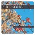 Bird Song (ptačí zpěv)