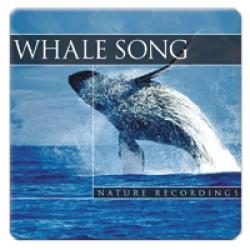Whale Song (velrybí zpěv)
